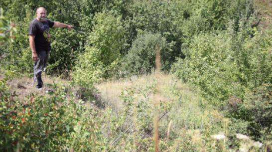 В каменском селе Тимирязево посадят кедровую сосну