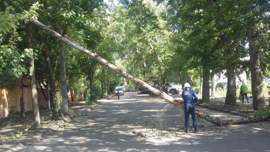 ВВоронеже шквалистый ветер повалил десять деревьев