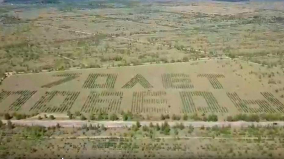 Воронежский лесной геоглиф показали с высоты птичьего полета