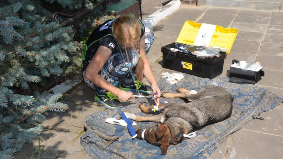 Верхнемамонские журналисты помогли спасти собаку со сломанной лапой