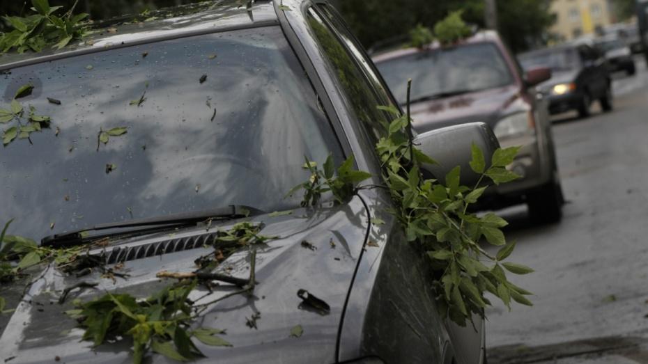 МЧС предупредило жителей Воронежской области о сильном ветре
