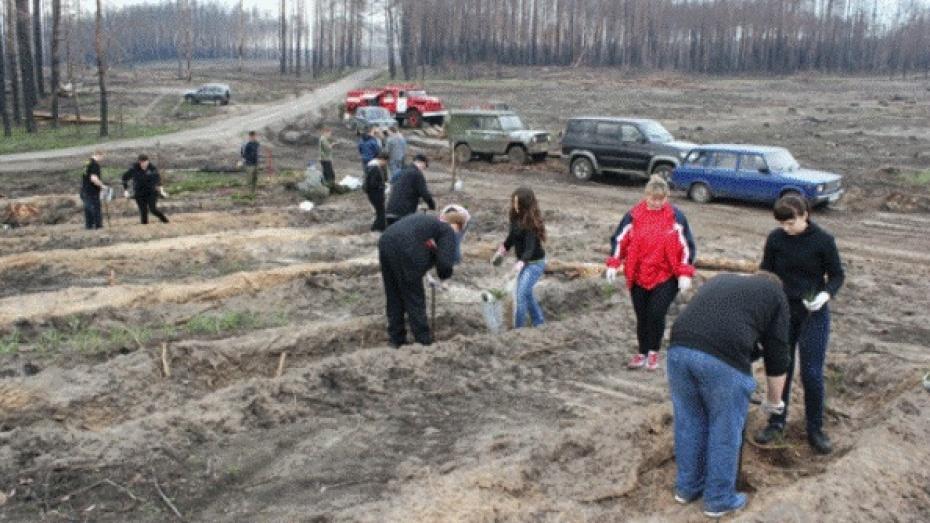 Воронежцам предлагают сажать фамильные деревья