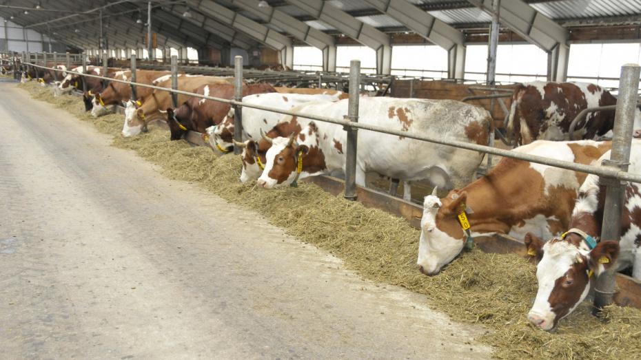Воронежская область заняла 3 место в России по производству молока