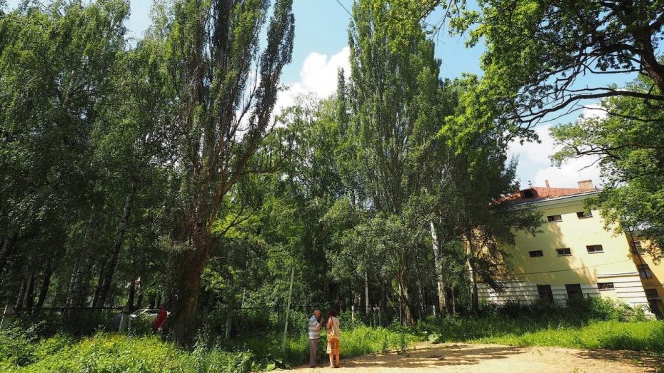 Вцентре Воронежа из-за пуха вырубят тополя