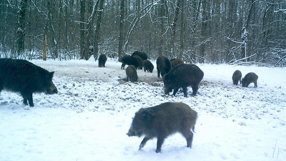 Ученые исследуют 122 км территории Воронежского заповедника для зимнего учета животных