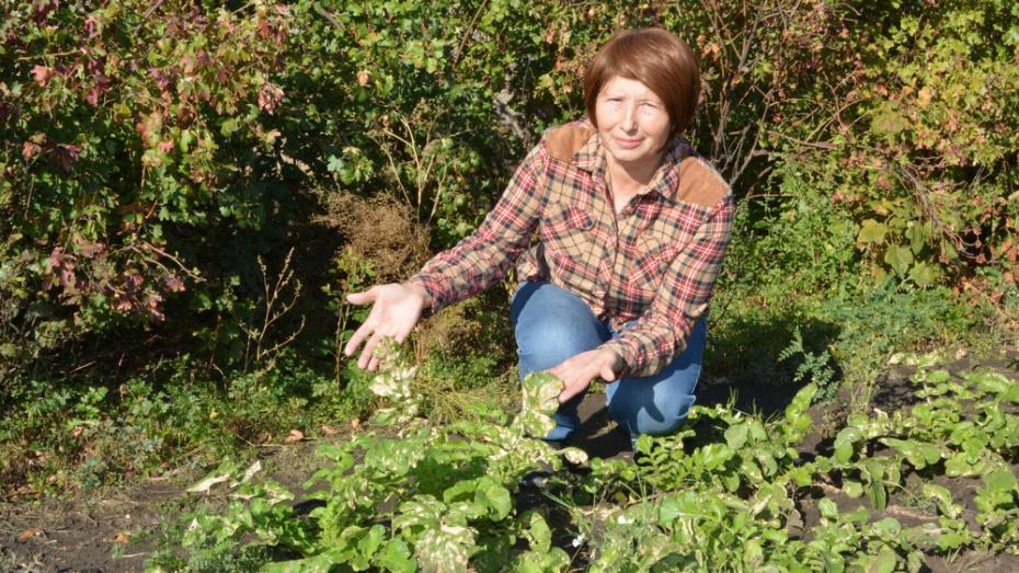 В богучарском селе Дьяченково растения поразила неизвестная болезнь