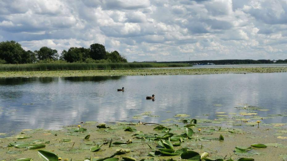 Метеорологи: на рабочей неделе в Воронеже будет до +31 градуса