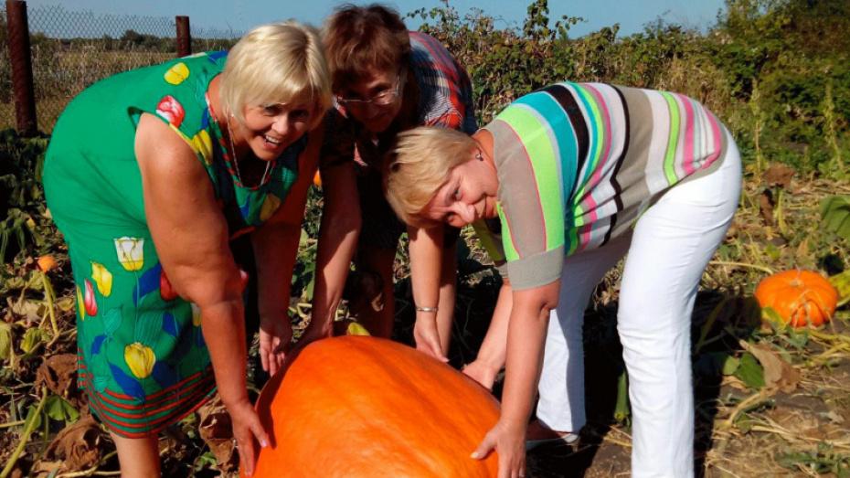 Жителей Боброва пригласили на фестиваль тыквы