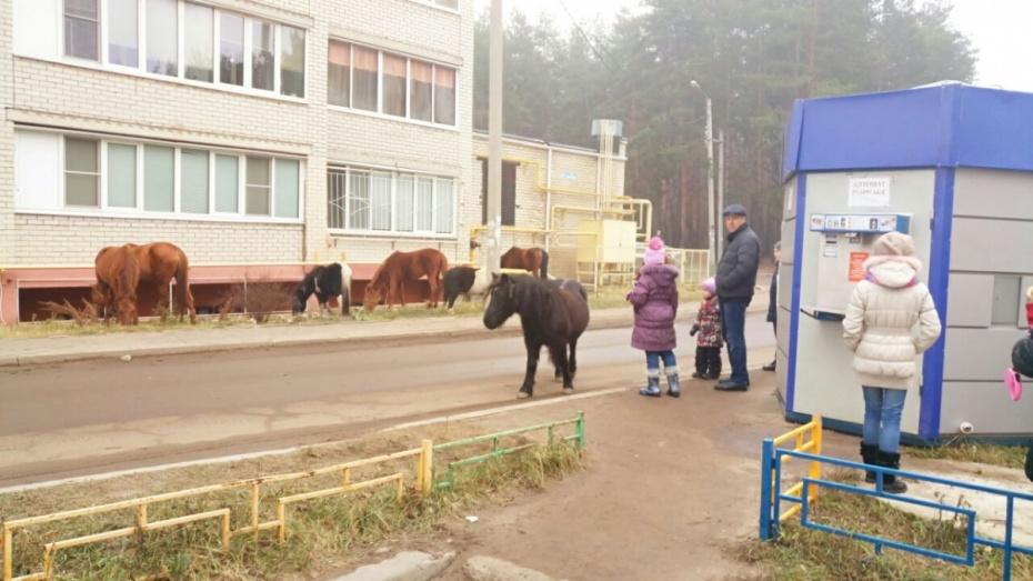 Воронежцы сказали осбежавших изконюшни лошадях