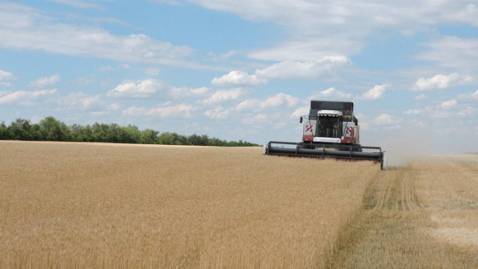 В Кантемировском районе начали уборку зерновых культур