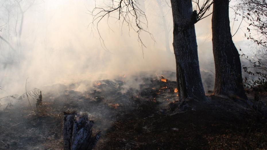 В Воронежской области лесные горельники разобрали на год раньше срока