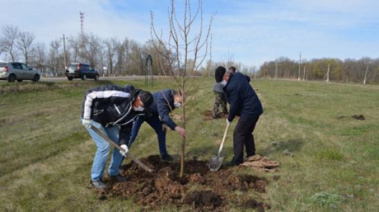 В Воробьевском районе высадили 10 тыс деревьев  в память о погибших в годы ВОВ
