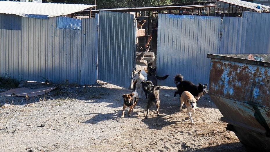 Хозяин воронежского приюта «Дора» выпустил на улицу 30 собак