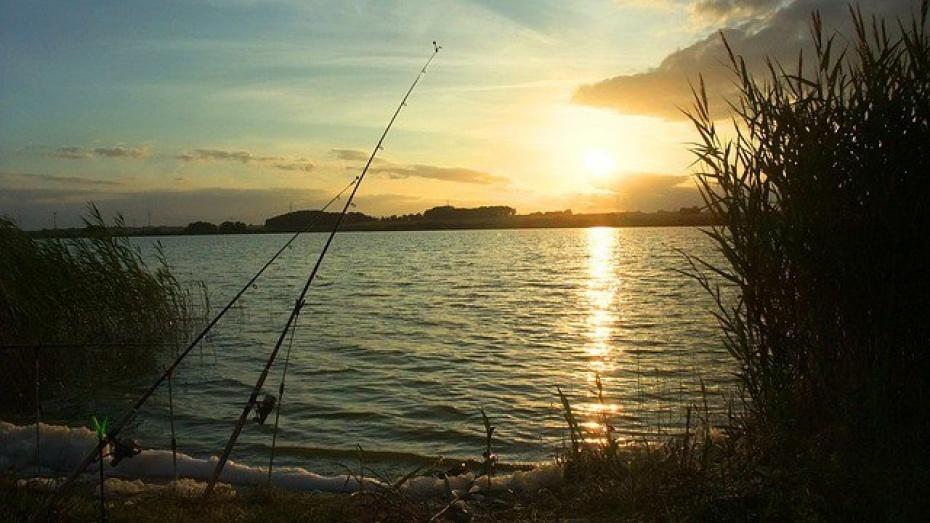 С20апреля жителям Воронежской области запретят ловлю рыбы вреке Дон
