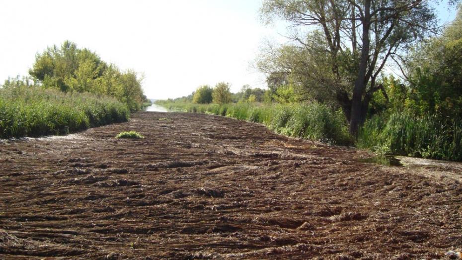 В Воронежской области волонтеры попросили специалистов помочь с очисткой реки Тихая Сосна