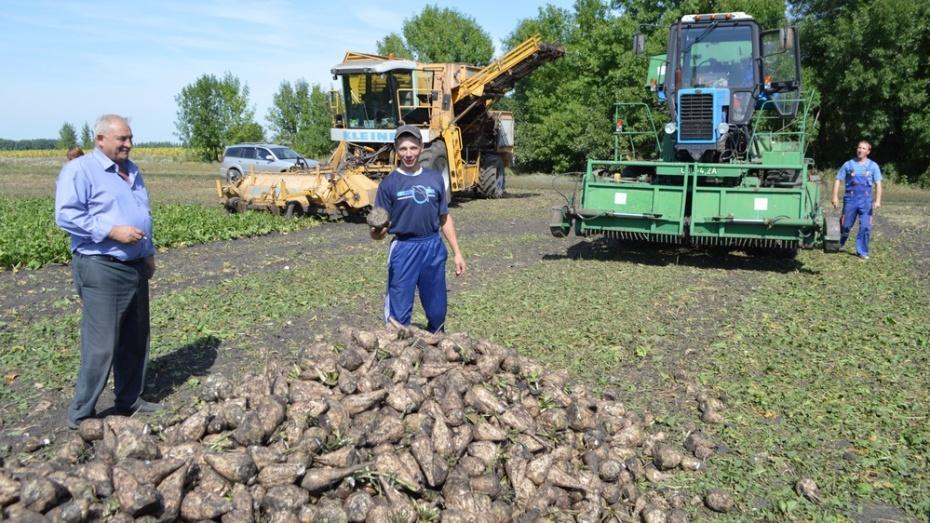 Эртильские земледельцы приступили к уборке сахарной свеклы
