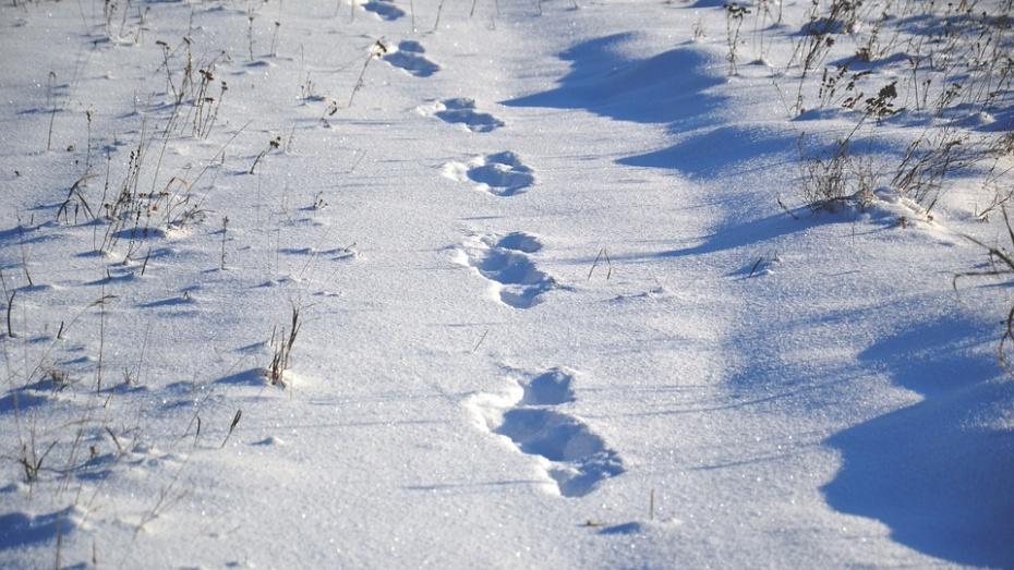 Под Воронежем угонщика ВАЗа отыскали последам обуви наснегу