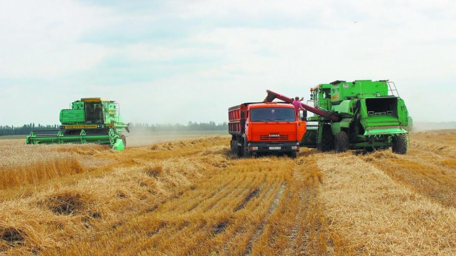 Таловские аграрии запланировали собрать рекордный урожай зерновых