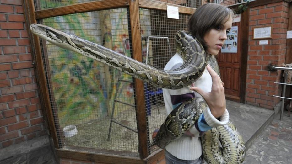 В новогоднем представлении в воронежском зоопарке будет участвовать живая змея