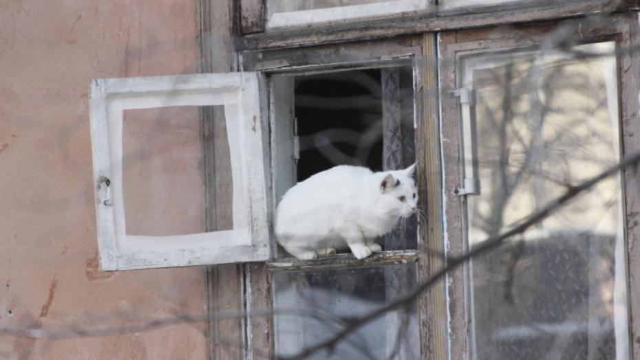 В Воронеже зафиксировали температурный рекорд