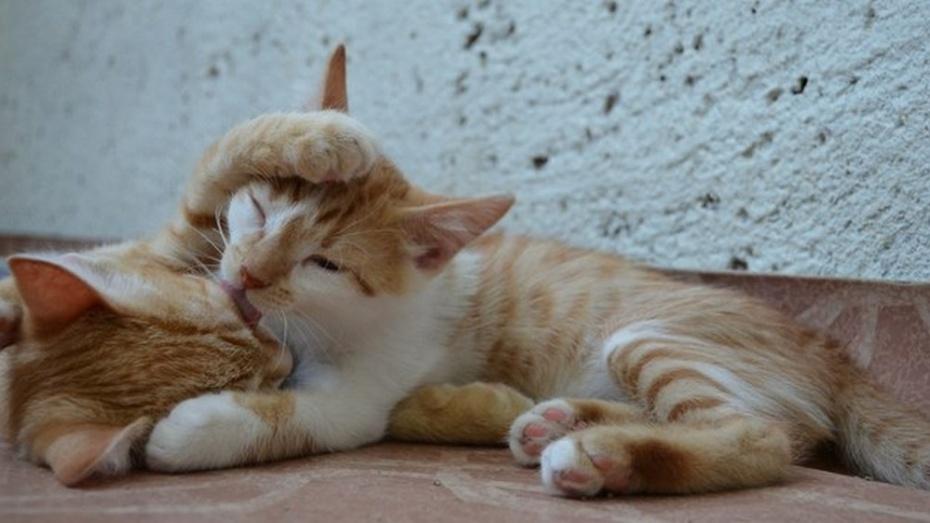 В Госдуме предложили ограничить количество животных в квартирах