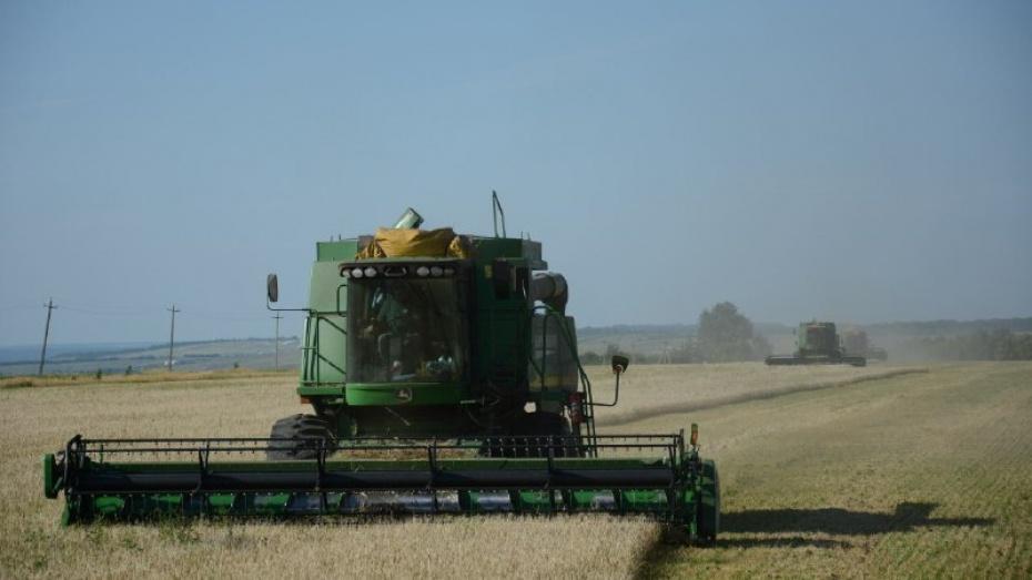В Острогожском районе намолотили 100 тыс т зерна